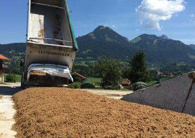Lettenbichler Lastwagen LKW entladen Biertreber Feuchtfuttermittel